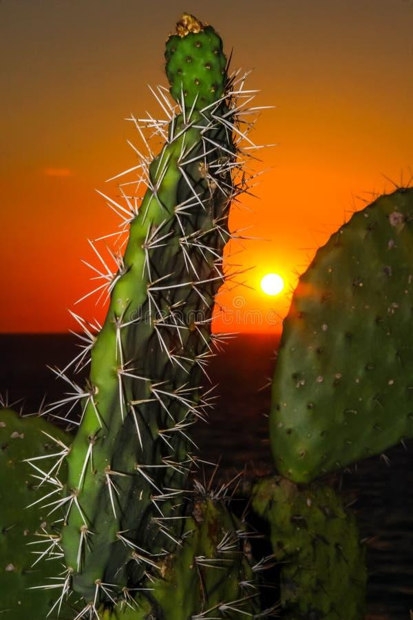 Eine Ansicht über einen Kaktus bei Sonnenuntergang stockfotos