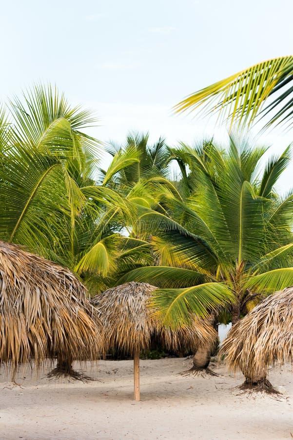 Eine Ansicht der Palmen auf einem sandigen Strand in Punta Cana, La Altagracia, Dominikanische Republik Kopieren Sie Raum für Tex stockfotos
