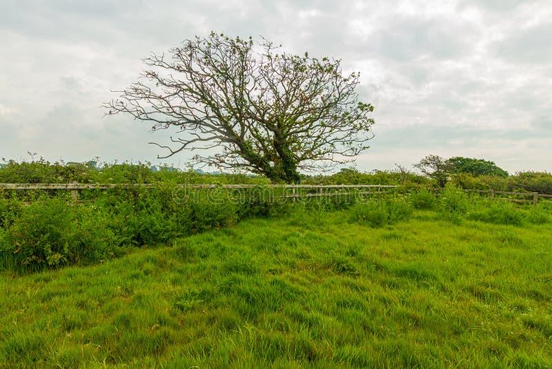 Eine Ansicht eines Blütenbaums mit Gras und grüner Vegetation unter einem weißen bewölkten Himmel lizenzfreie stockbilder