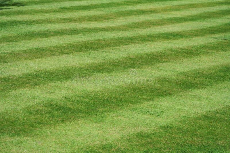 Eine Ansicht eines ordentlich gemähten Rasens, 45 Grad zum Streifen, 15 Streifen stockbilder