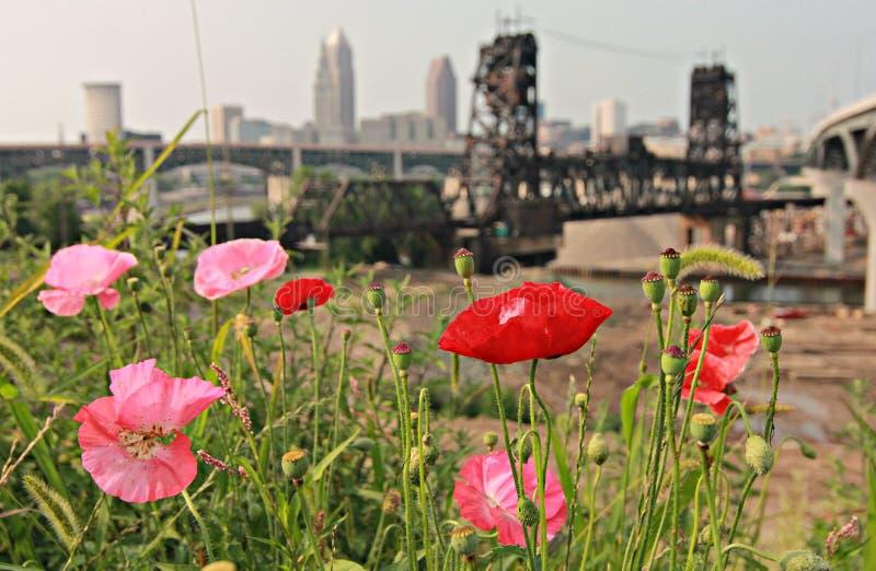 Eine Ansicht von Blumen über den Skylinen von Cleveland lizenzfreie stockfotografie