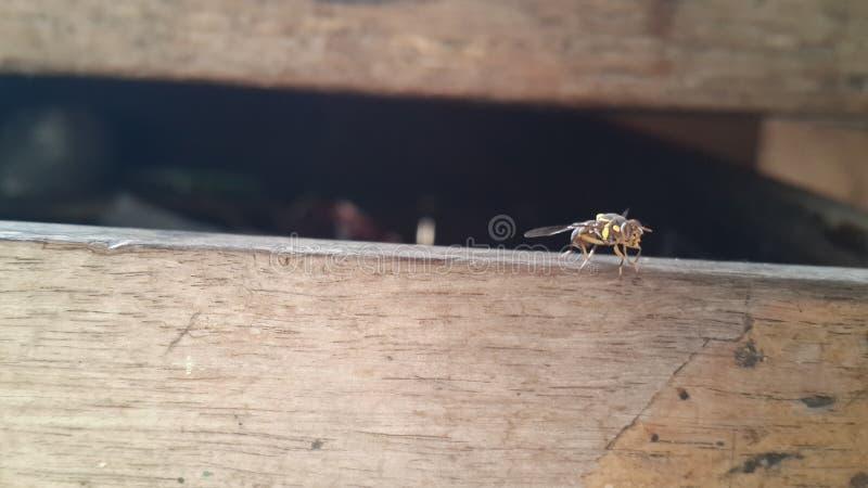 Eine Art Insekt, das anderes Tierblut verbraucht, ist Nahrung lizenzfreie stockfotografie