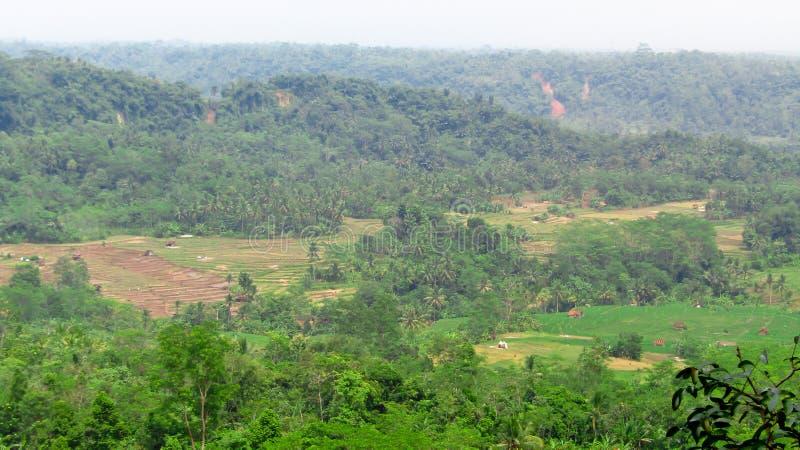 Eine Ausdehnung von den Reisfeldern umgeben durch Hügel lizenzfreies stockbild