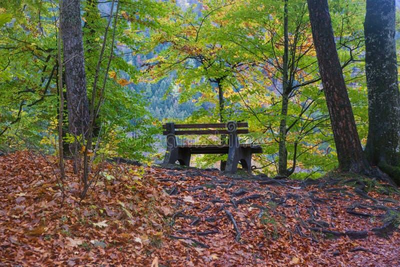 Eine Bank in einem Herbstwald stockfotografie