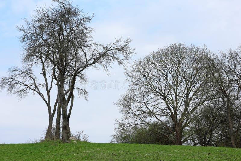 Eine Baumgruppe auf einem Hügel im Vorfrühling stockfotografie