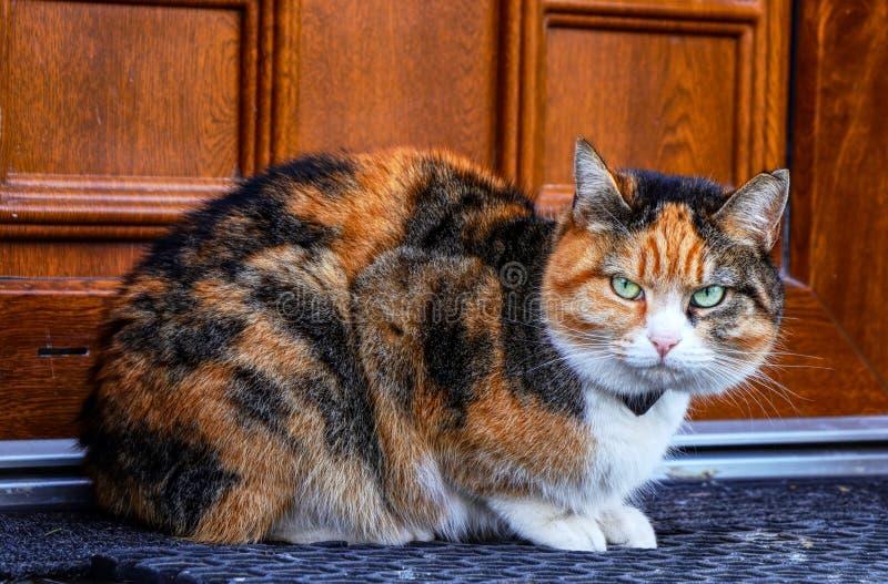 Eine beleidigte Hauskatze, die vor Haupttür und jeder töten sitzt, das hereinkommen möchten Ein buntes Kätzchen mit grünen Augen  stockfoto
