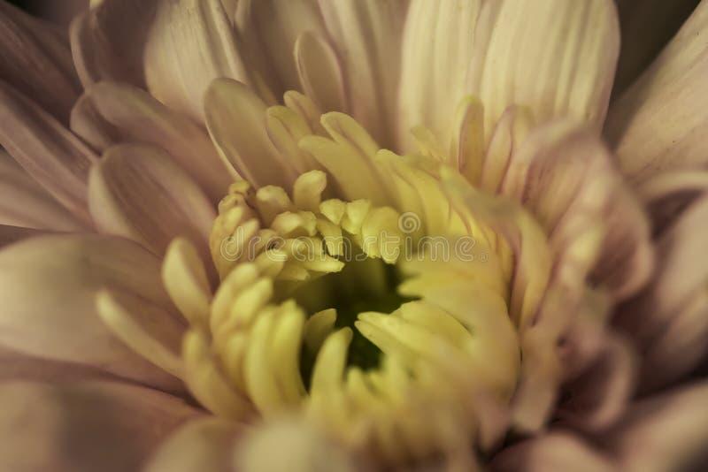 Eine blühende Blume stockbilder