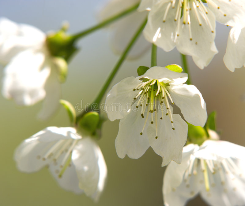 Eine Blüte lizenzfreie stockfotos