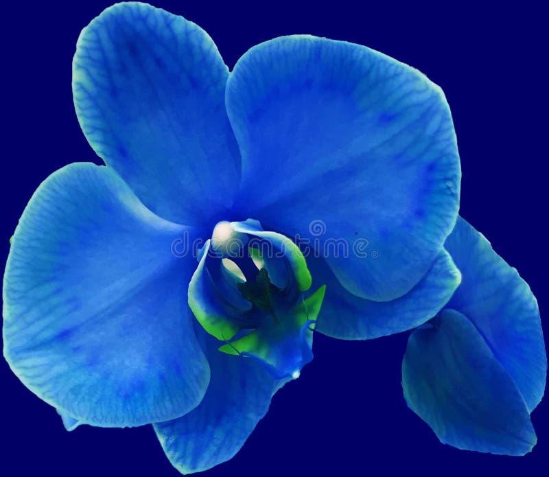 Eine blaue Orchidee mögen die Nacht stockbilder