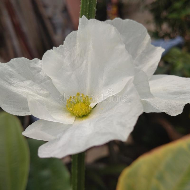 Eine Blume stockfotos