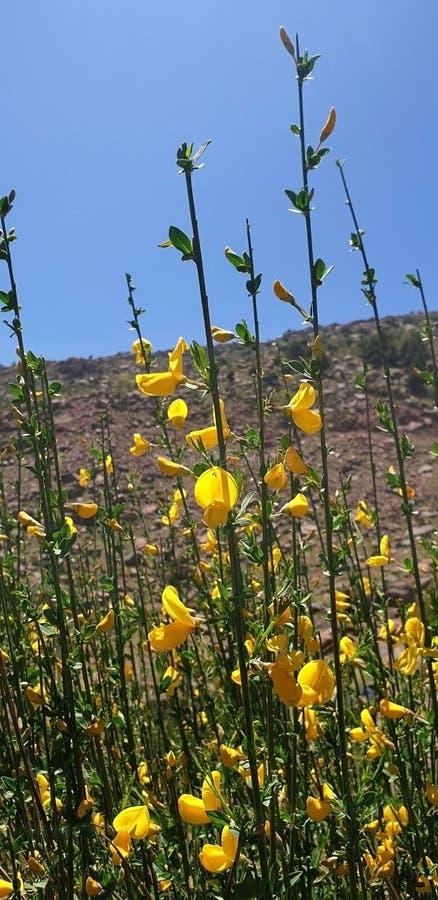 Eine Blume der Beschaffenheit des Berges stockbilder
