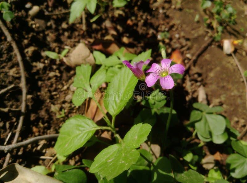 Eine Blume in einem Garten lizenzfreie stockfotos