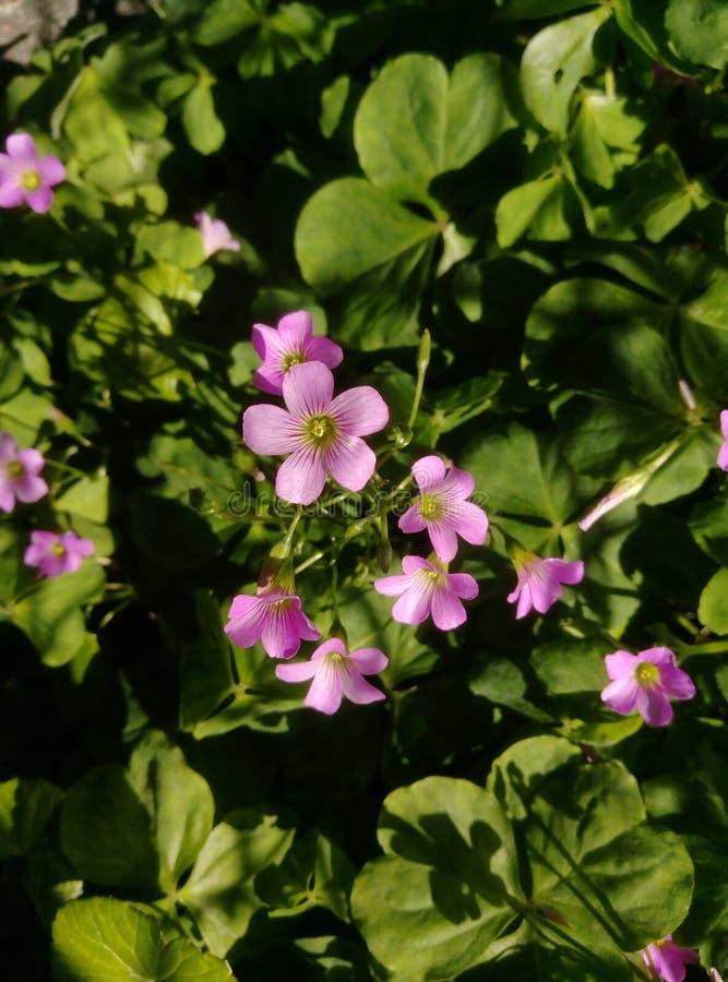 Eine Blume in einem Garten lizenzfreies stockfoto