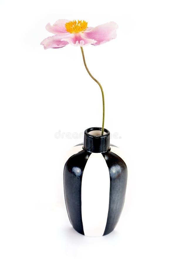 Eine Blume ist Anemone stockbilder
