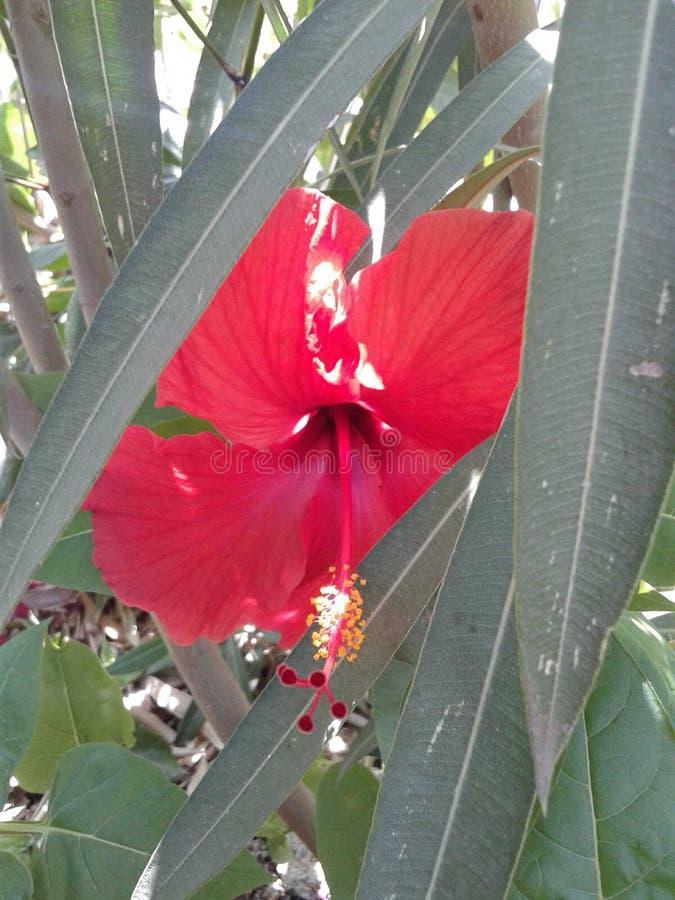 Eine Blume versteckt in den Blättern lizenzfreies stockbild