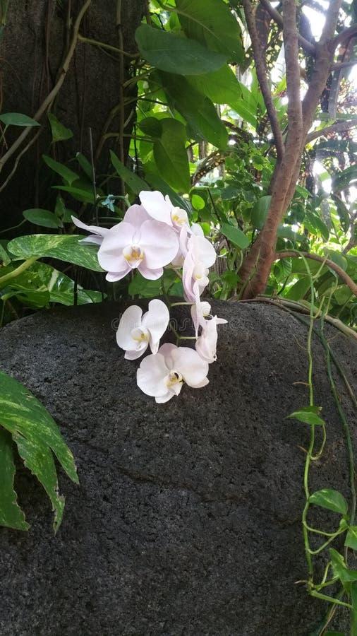 Eine Blume von den Felsen stockfotografie