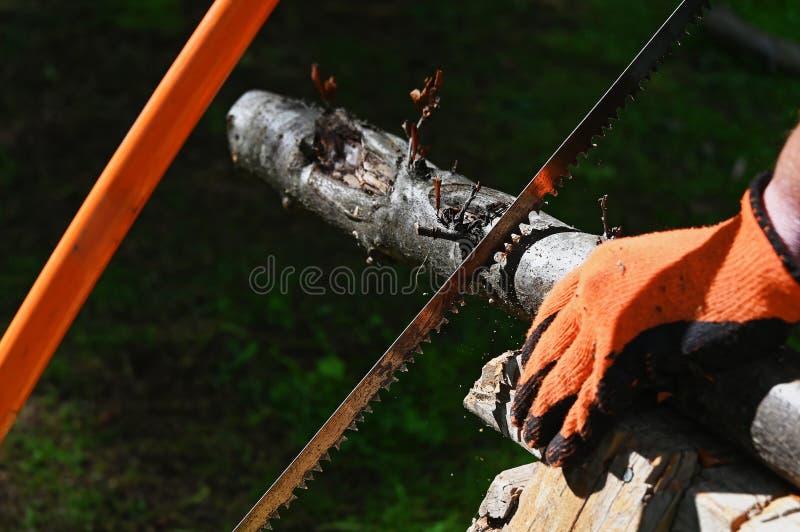 Eine Bogensäge, die eine große Niederlassung auf einem Sägepferd sägt lizenzfreie stockfotos