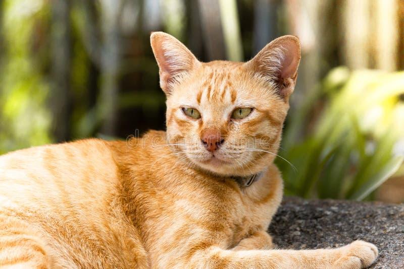 Eine braune thailändische Katze legen sich und schlafend auf Stein in der Gartenzone, Se hin stockbild