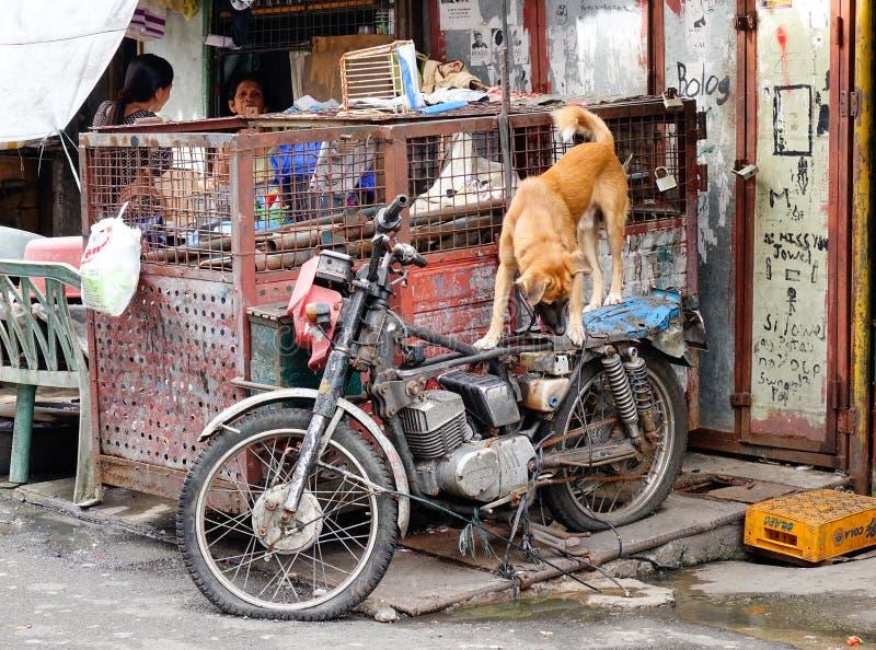 Eine Bretterbude an Baclaran-Bezirk in Manila, Philippinen stockfotografie