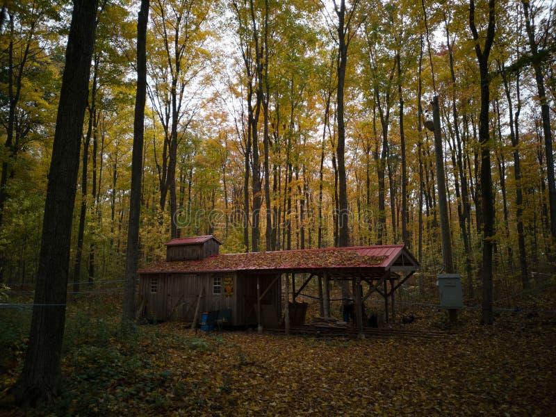 Eine Bretterbude mitten in dem Wald stockbild
