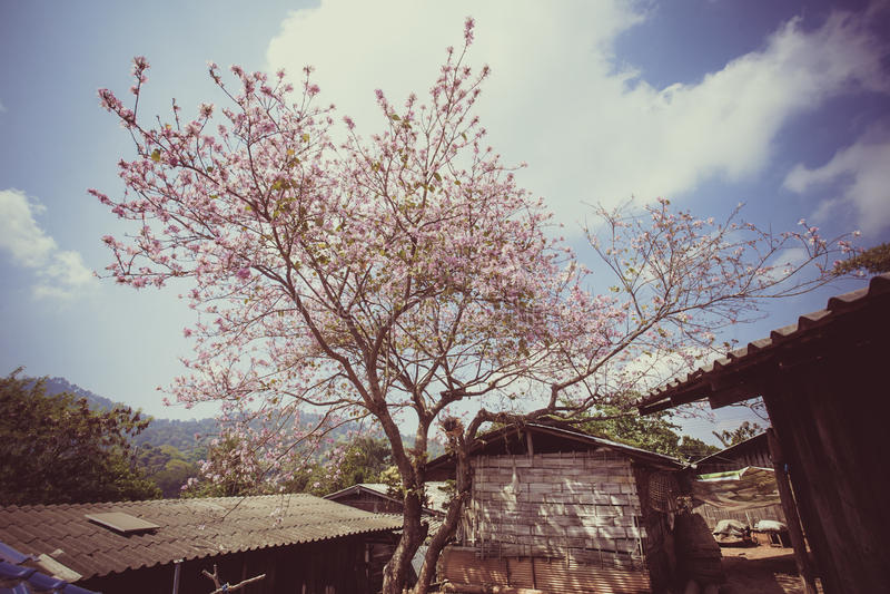 Eine Chiang- Maireise lizenzfreie stockfotografie