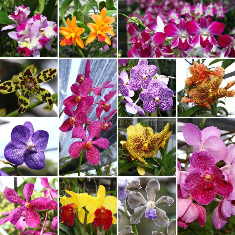 Orchide Collage lizenzfreie stockbilder