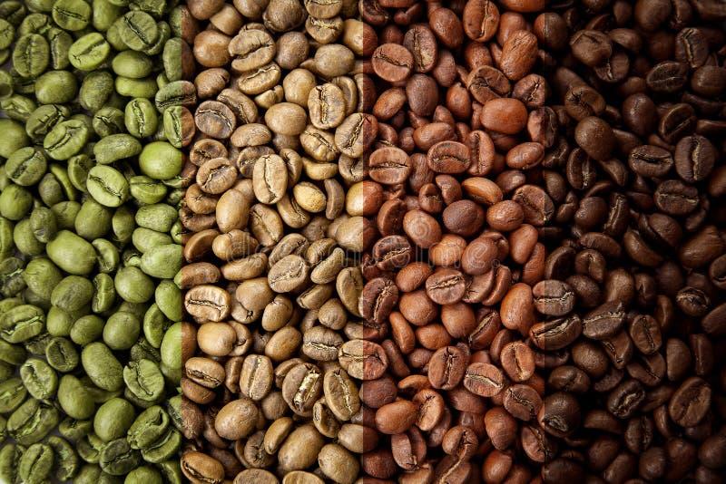 Eine Collage von den Kaffeebohnen, die verschiedene Stadien der Röstung von rohem durchgehendem zum italienischen Braten zeigen stockfotografie