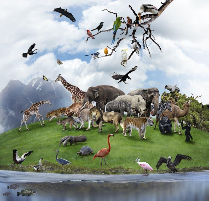 Eine Collage von wilden Tieren und von Vögeln stockfotografie