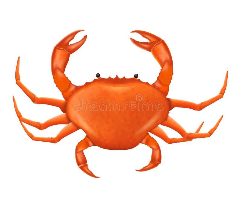 Eine Crab-Vektorgrafik in realistischem Stil stock abbildung