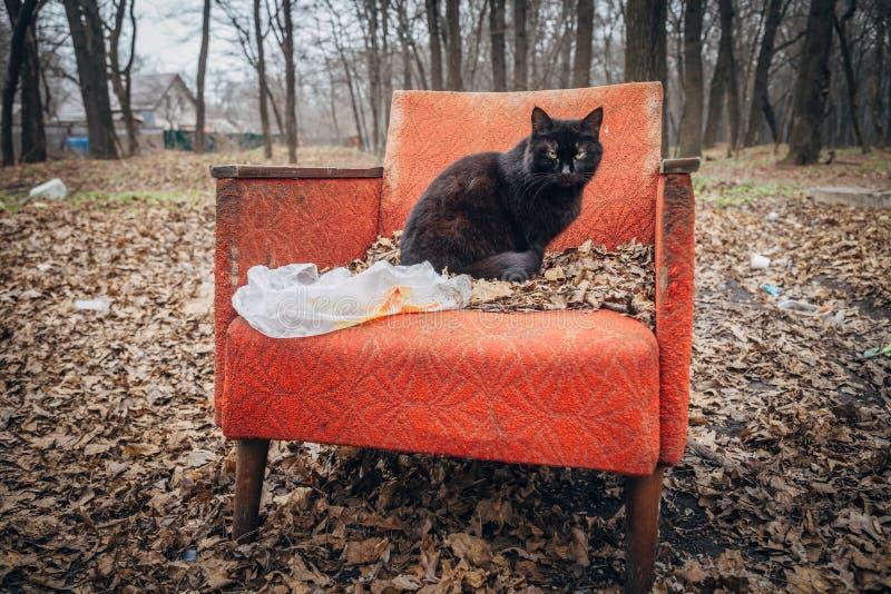 Eine düstere schwarze Katze, die auf einem alten verlassenen roten Lehnsessel sitzt stockfoto