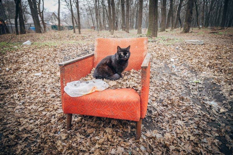 Eine düstere schwarze Katze, die auf einem alten verlassenen roten Lehnsessel sitzt stockfotografie