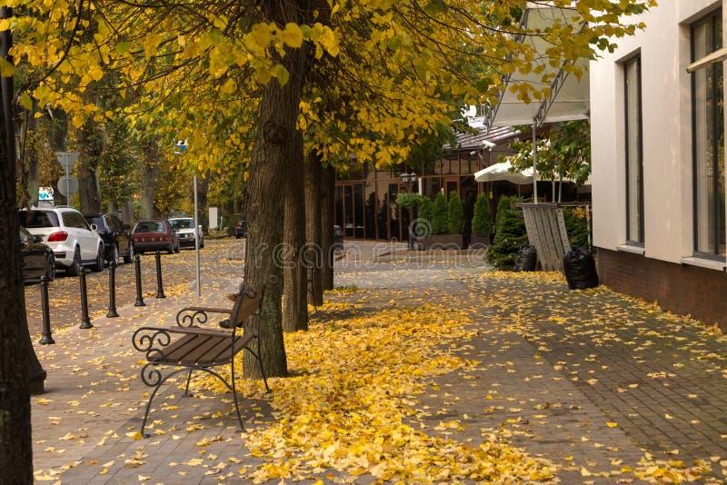 Eine der Straßen im Herbst in Svetlogorsk, Russland stockfotografie