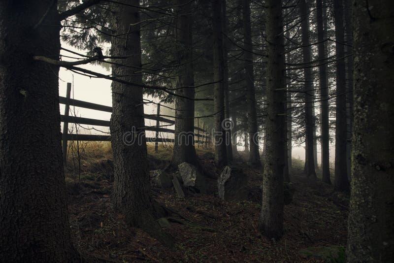 Eine dunkle Waldszene mit Nebel lizenzfreie stockfotografie