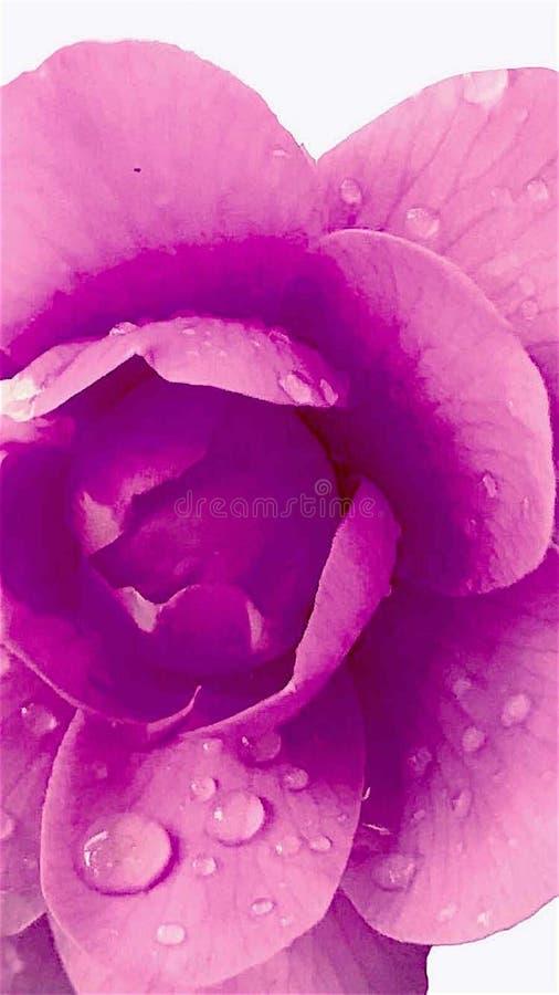 Eine Einzelheit einer schönen, frischen Orchidee lizenzfreie stockfotos