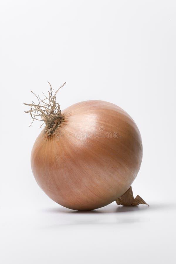 Eine einzelne braune Zwiebel lizenzfreies stockfoto