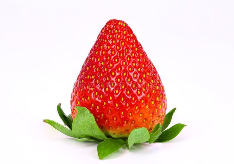 Eine einzelne Erdbeere lizenzfreies stockfoto