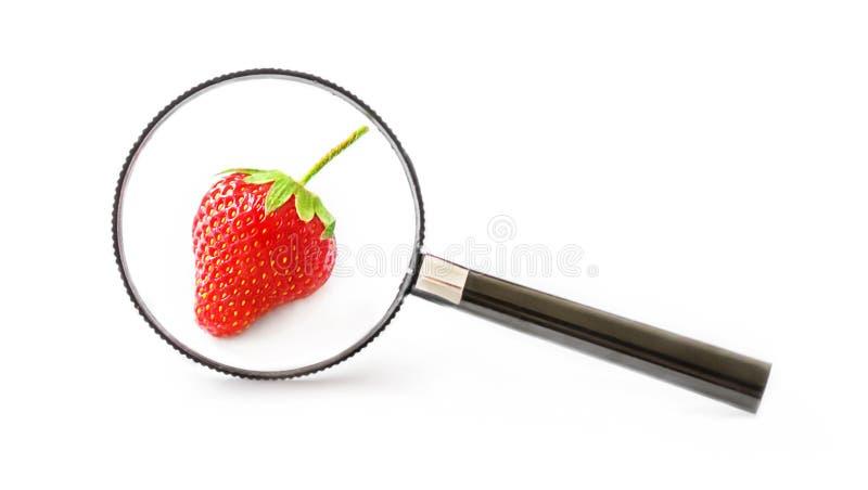 Eine einzelne frische Erdbeere auf einem weißen Hintergrund unter einer Lupe Das Konzept des gesunden Lebensmittels und umweltsmä stockbilder