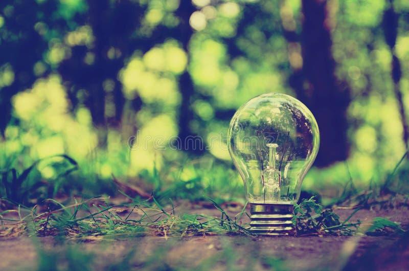 Eine einzelne Lampe im Wald stockfotografie