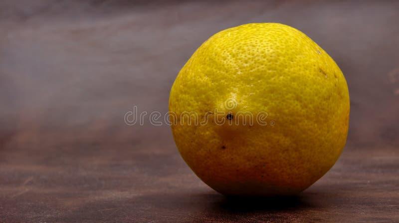 Eine einzelne Zitrone lizenzfreie stockfotos