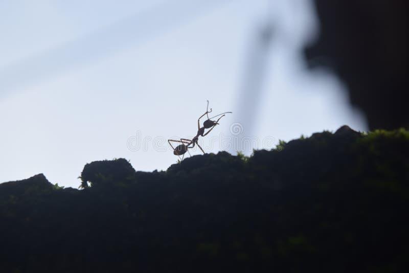 Eine einzige Ant Working Relax lizenzfreie stockfotos