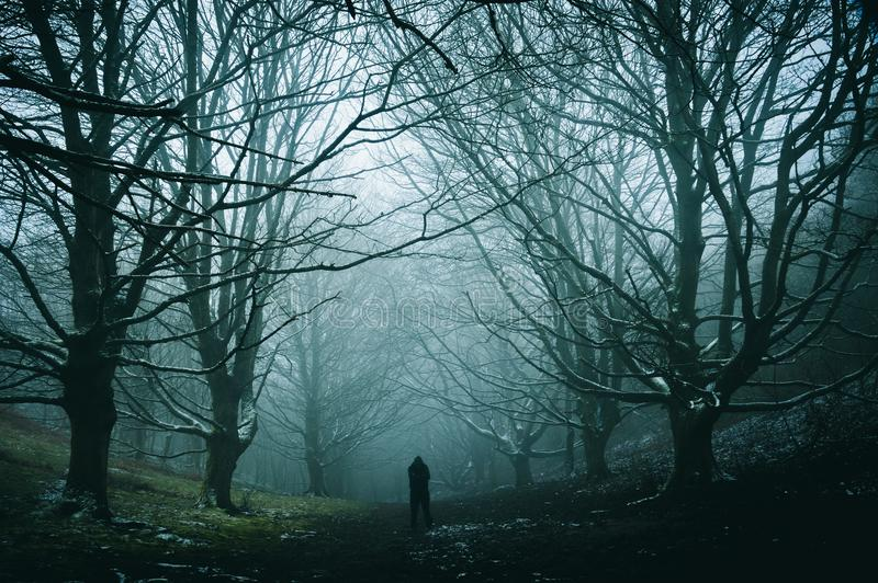 Eine einzige Zahl, die in einer gespenstischen, nebeligen Winterallee von Bäumen in einem Weg durch einen Wald steht stockbild