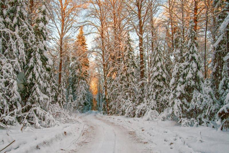 Eine Eisstraße, die durch einen schneebedeckten Wald bei Sonnenuntergang überschreitet januar Rus stockbild