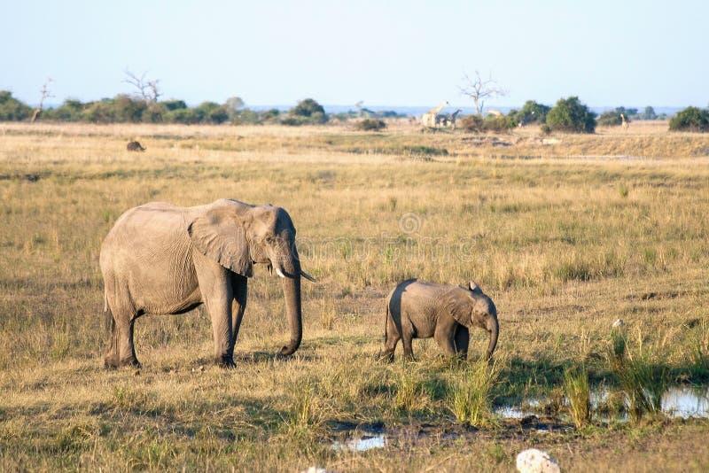 Eine Elefantmutter und ihr Baby in Botswana lizenzfreies stockfoto