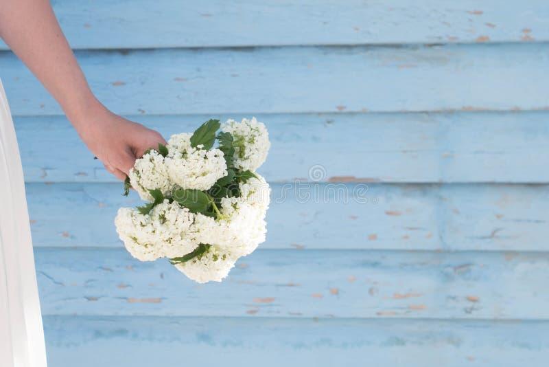 Eine empfindliche weibliche Hand hält einen kleinen Blumenstrauß von weißen Blumen gegen eine blaue Plankenwand Gebrauch für Entw lizenzfreies stockbild