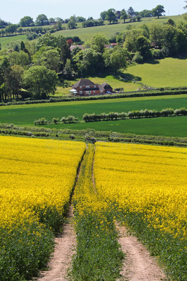 Eine englische landwirtschaftliche Landschaft lizenzfreie stockfotografie