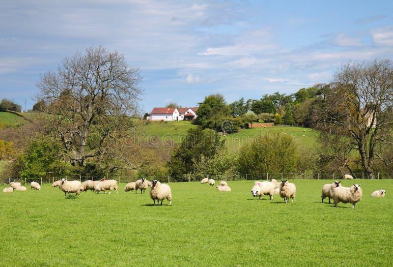 Eine englische landwirtschaftliche Landschaft lizenzfreie stockfotos
