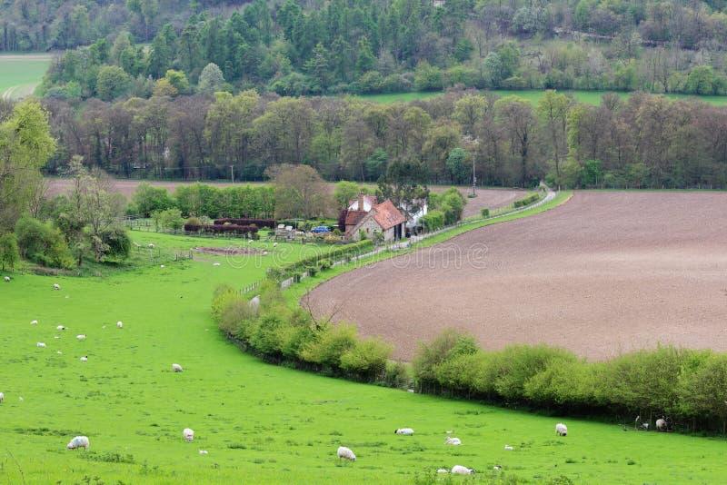 Eine englische landwirtschaftliche Landschaft mit reifendem Mais lizenzfreies stockbild