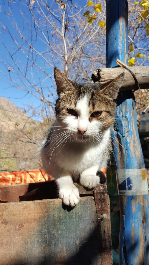 Eine entschlossene Katze von Marakesh, Marokko lizenzfreies stockfoto