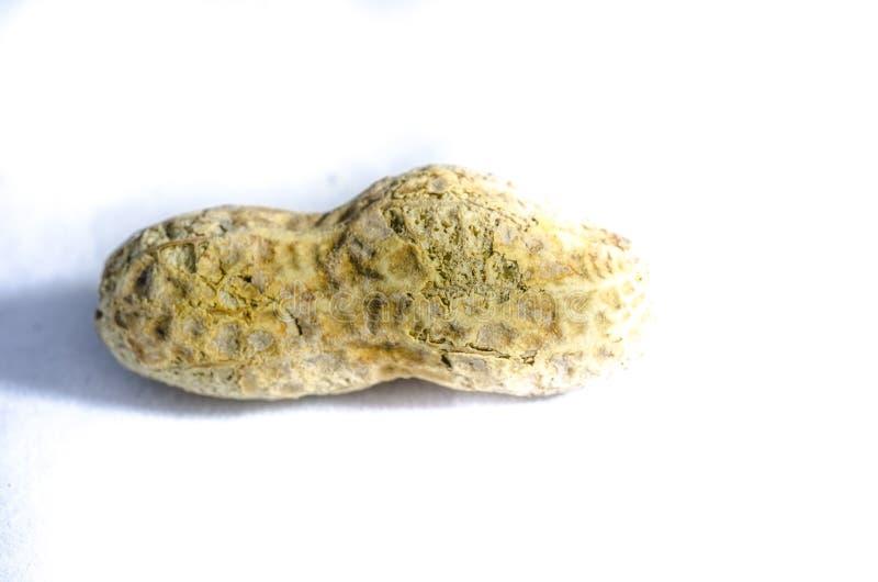 Eine Erdnuss muss erhalten stockfotos