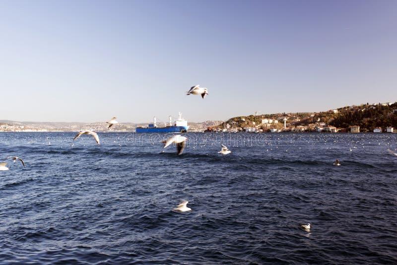 Eine erstaunliche Ansicht von Seemöwen und Meer und große Tanker, die durch das bosphorus von Istanbul überschreiten stockfotos